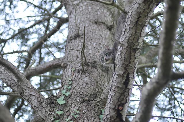 gray's tree