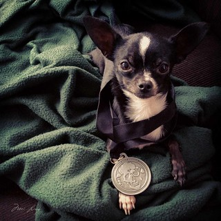 Daisy and the zombie race medal