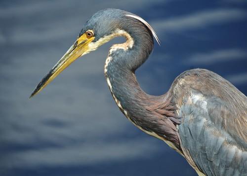 A Heron's Eye