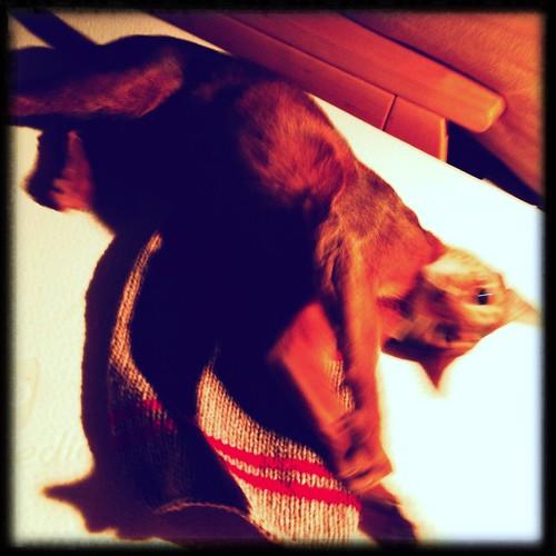 hipstajakesweater2