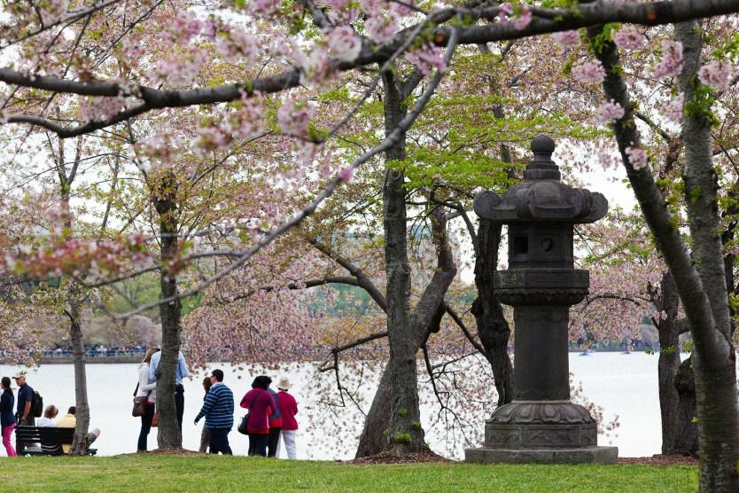 Japaneses Lantern, Cherry Blossom Festival.
