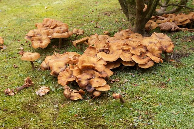Mushrooms at Base of Bush