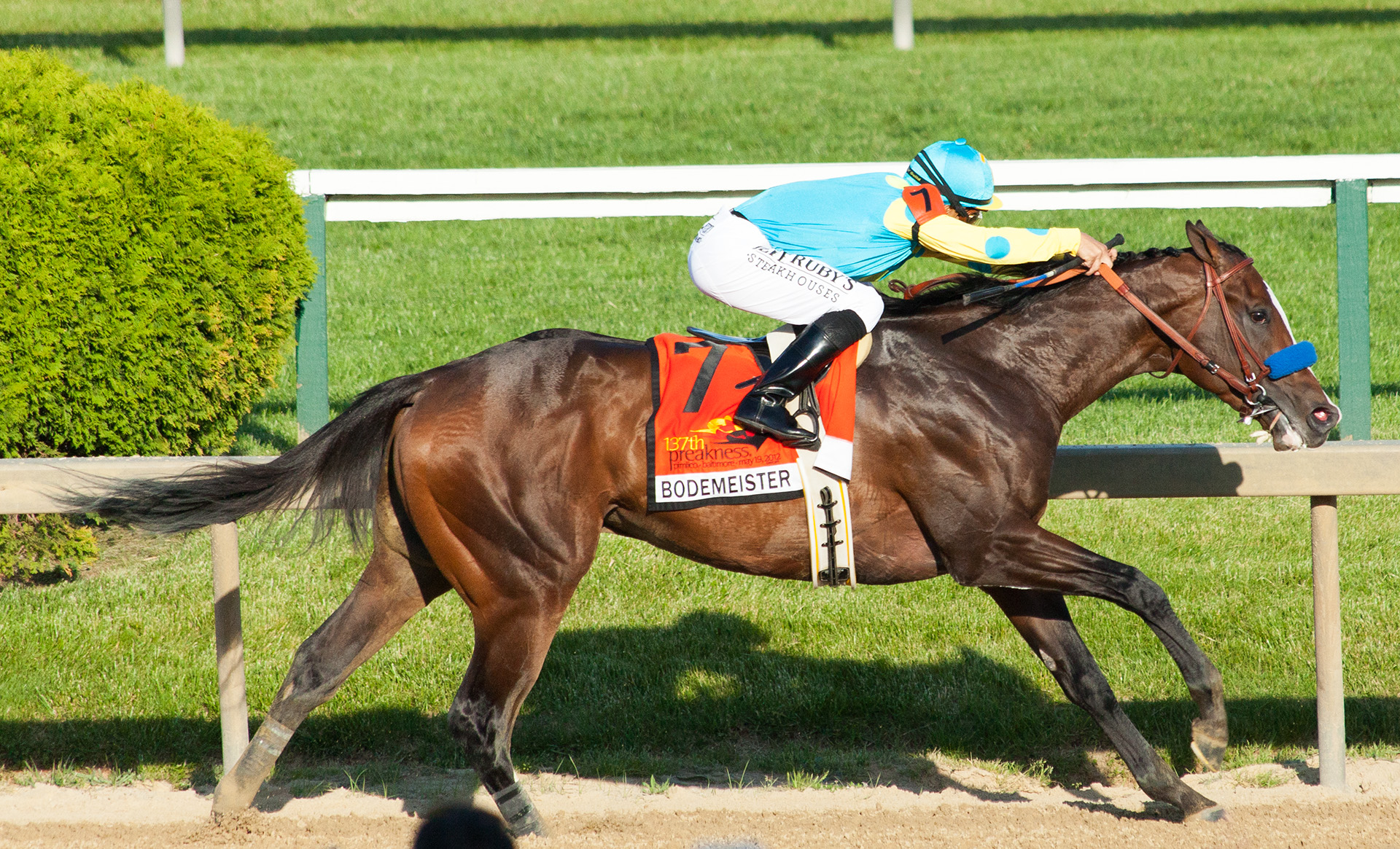 Bodemeister in the final stretch.