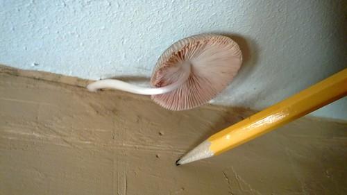 20130625_mushroom3