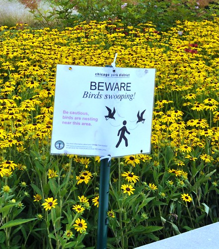 Oh, So that's Why the Birds Were Swooping