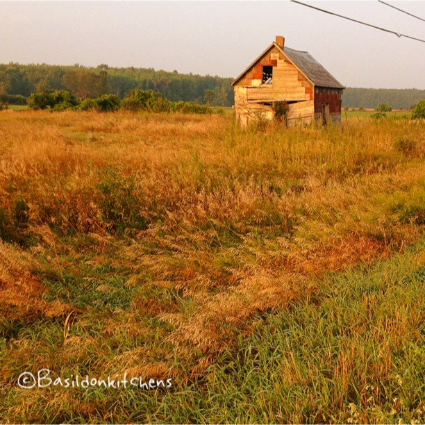 Aug 21 - slow {as I drive by this building daily, I am watching it's SLOW decay} #fmsphotoaday #slow #rural #princeedwardcounty #decay #grass #field