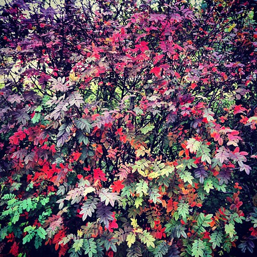 #yarnpadc Day 30: Leaves