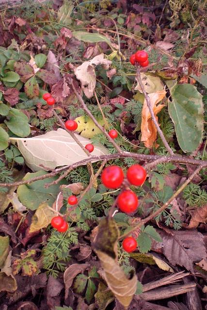 redwberry