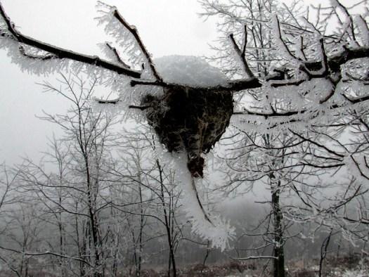 ice-fogged nest