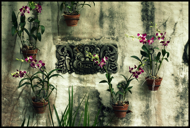 walls adorn with orchids