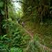 Trail to the Chocó