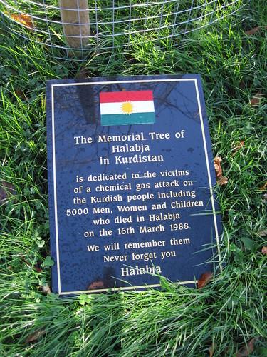 Kurdistan Tree, Middlesbrough