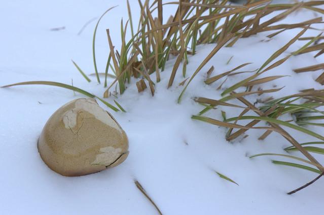 Zefr (Zen Frog) and Carex morrowii 'Ice Dance'