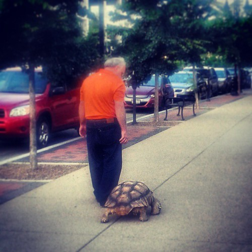 Saw a guy walking his pet tortoise in downtown Louisville. What.