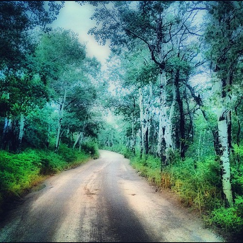 Thru the woods to grandmothers house we go ... by @MySoDotCom