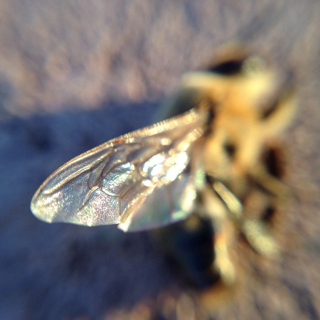 Macro Bee - 5