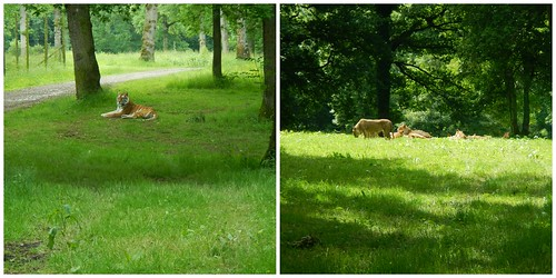 Longleat - The Predators