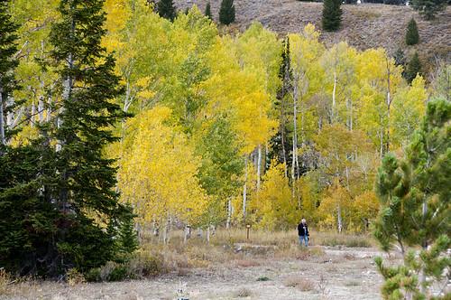 Logan Canyon 6