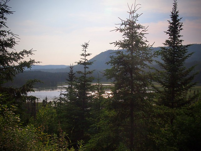 Bog View 2
