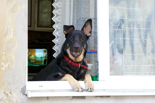 A dog in a window. Lviv, Ukraine