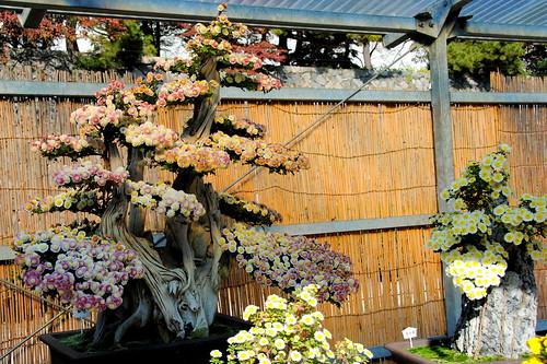 Fall Nagoyajo 031r