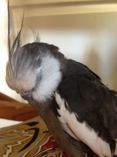 Sleepy Peepster