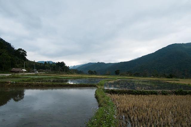 rice field, Phon Savanh