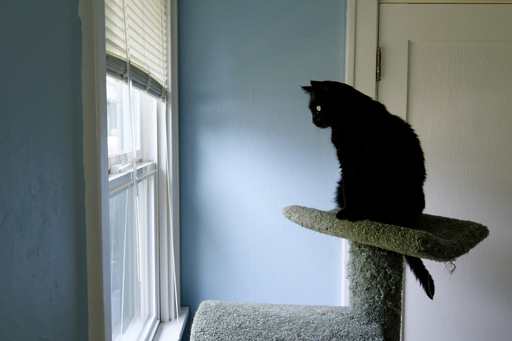 Our cat Emma at the top of the cat tree watches birds outside the window