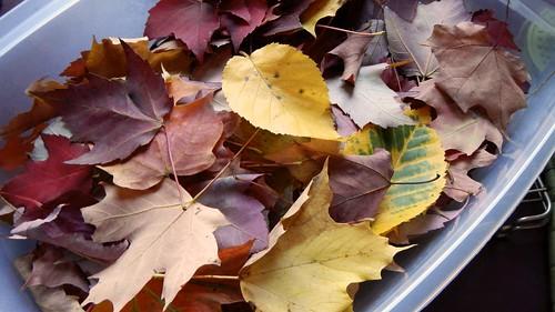Glycerin Leaves 1