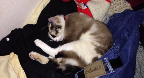 Cat in pants