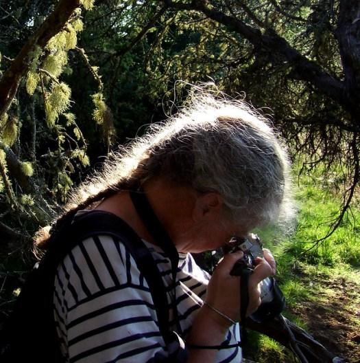 fruticose lichens