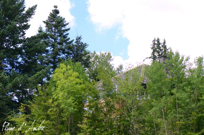 maison cachée dans les arbres