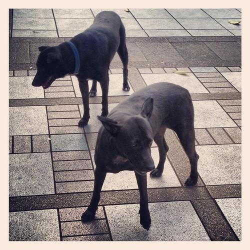 Two black tugou