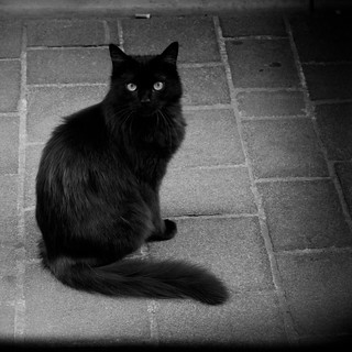 "Edgar Allan Poe's ""The Black Cat"""