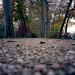 Poissy - Parc Messonier 05-2