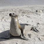 Viajefilos en San Cristobal, Galapagos 044