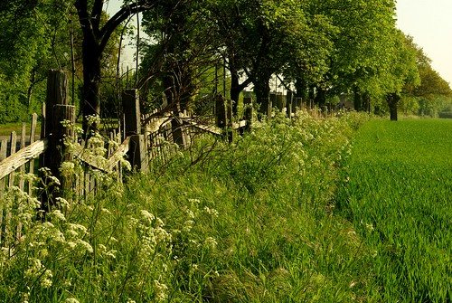 20130519-19_Rustic Fence - Cawston by gary.hadden