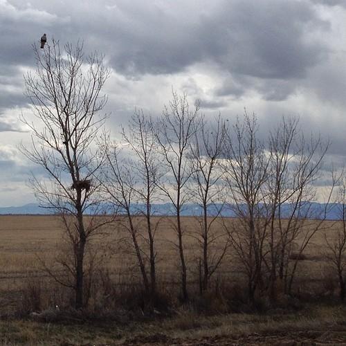 Hawk guarding the nest by @MySoDotCom