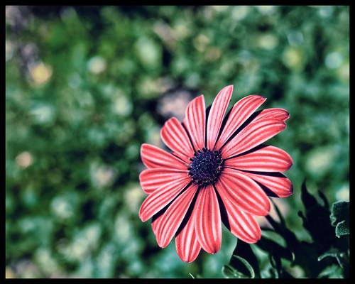 Plant Life I
