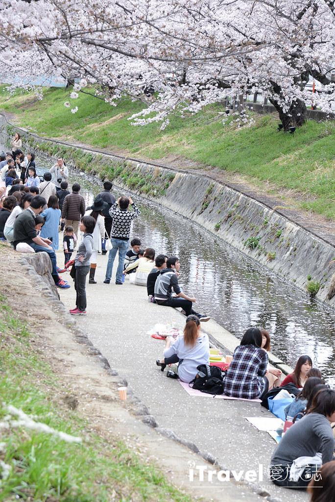 奈良赏樱景点 高田川千本樱 38