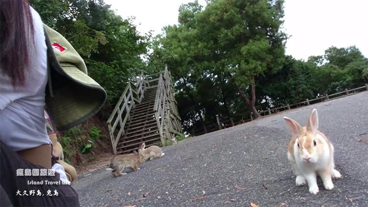 大久野島22