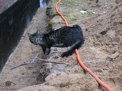 Katze mit eigenem Sandspielplatz
