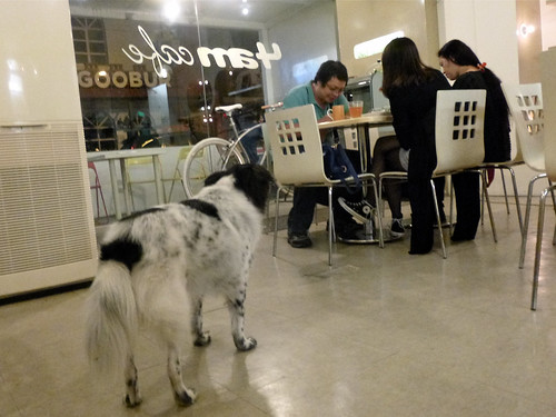 20130923 Cafe dog is watching you.