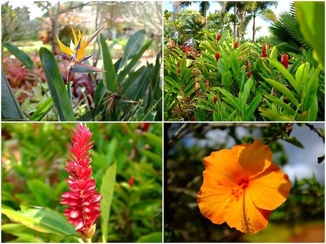 Hawaii - Dole Plantation