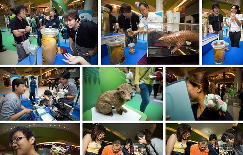 Festival of Biodiversity 2013 Day 1 (13 July 2013) - a set on Flickr