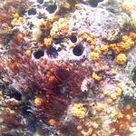 Viajefilos en el Leon Dormido, Galapagos 005