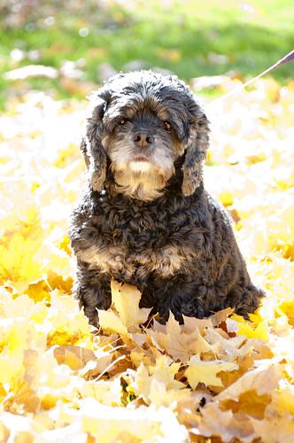 Bella in leaves