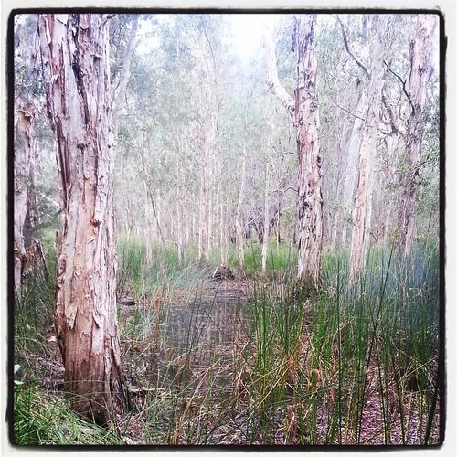 Swampy creek by andrewgillsag