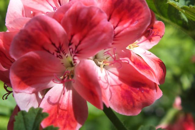 Flowers at Duthie Park