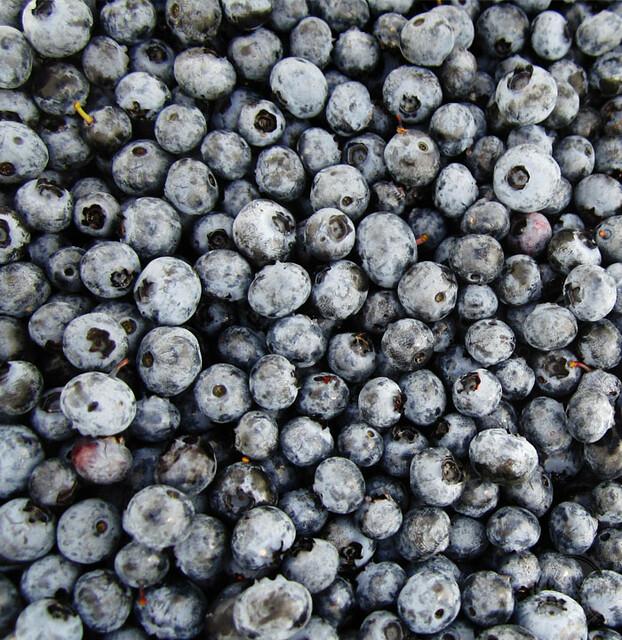 Homemade Blueberry Ice Cream Recipe | DesignLively.com